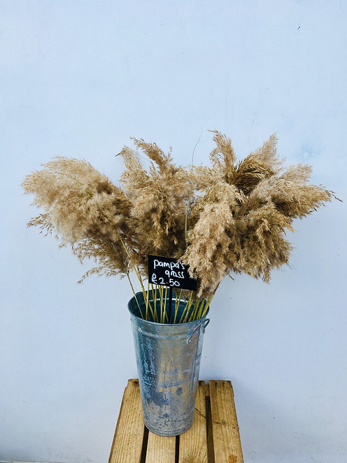 Dried Pampa Grass