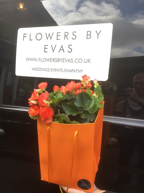 Begonia Orange Gift Bag