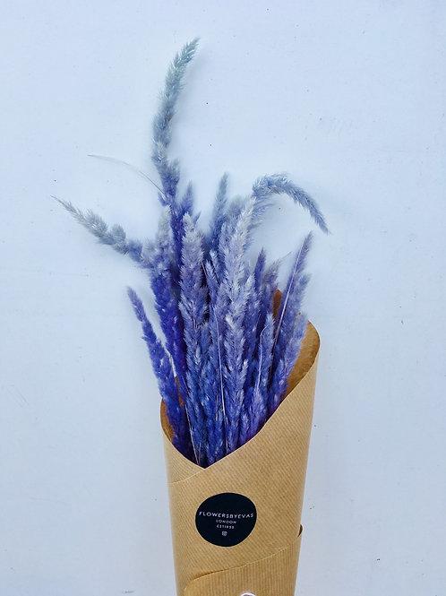 Dried Thin Pampa Grass