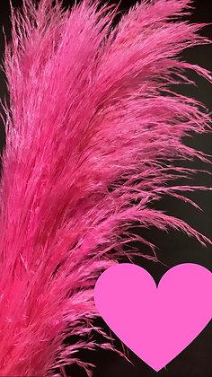 Pampas Pink grass