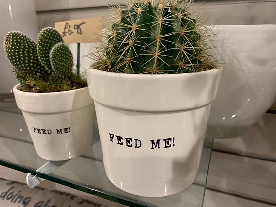 Cactus feed me potted arrangement