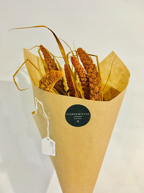 Dried Bunch of Setaria