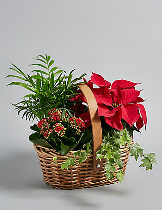 Indoor planted arrangement