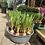 Thumbnail: Muscari Planter