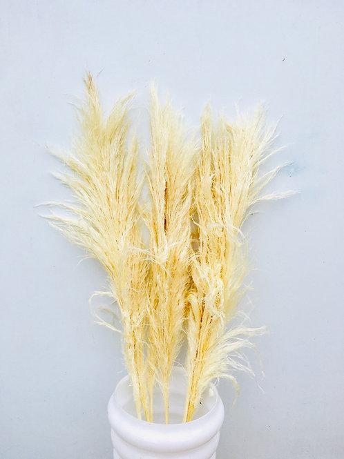 Tall Dried Pampa Grass