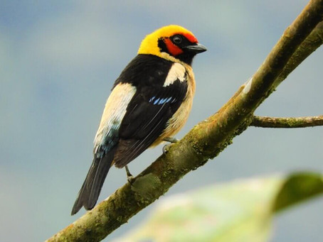 Colombia se coronó por cuarta vez campeón mundial de avistamiento de aves