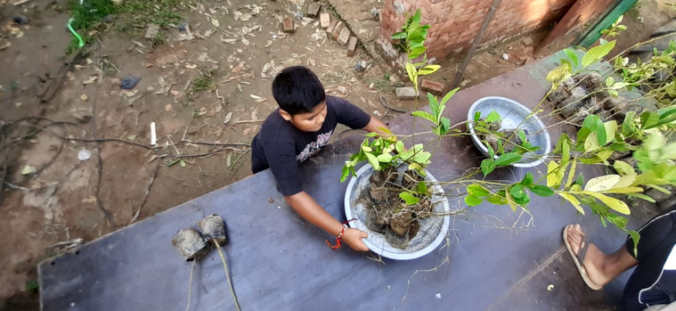 """One Million Fruit Trees"" | One Tree Planted x Sustainable Green Initiative  | Budhsaini, Baghpat, Uttar Pradesh (2020)"