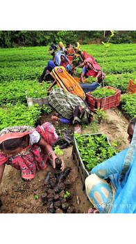 """One Million Fruit Trees"" | One Tree Planted x Sustainable Green Initiative  | Bundelkhand, Uttar Pradesh (2020)"