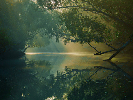 Why are mangroves important?