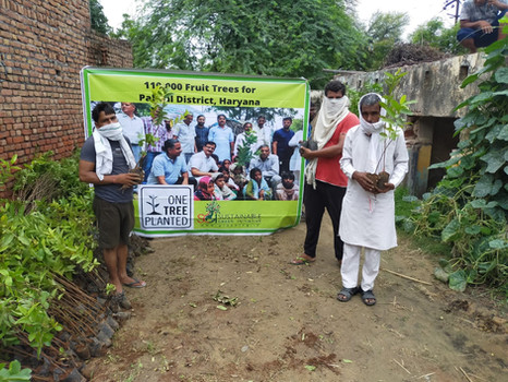 """""""One Million Fruit Trees"""" 