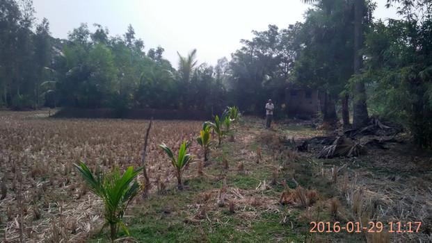 Siddha Group x Wildlife Protection Society of India | Bali Island, Sunderbans (2016)