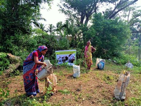 """One Million Fruit Trees"" | One Tree Planted x Goonj  | Odisha (2020)"