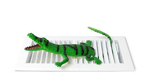FRT_Alligator 2.jpg