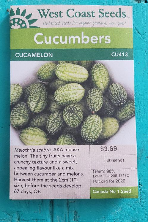 Cucamelon Cucumbers