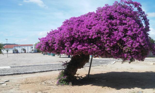Resultado de imagem para Caboclo ja Festa do Tamarindo