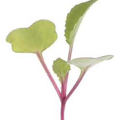 Trinto Radish micro green