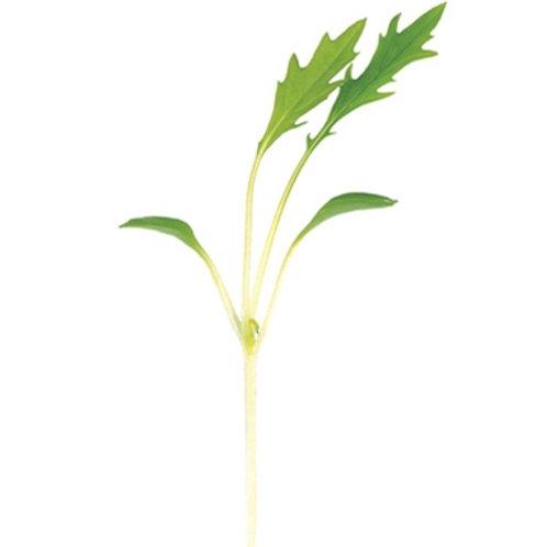 Mizuna micro green