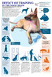 Effects of Dog Training in Your Dogs' Brain