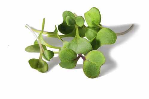 Broccoli micro green