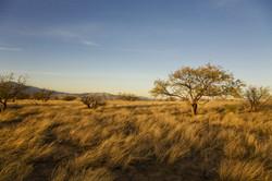 Desert Plain.jpg