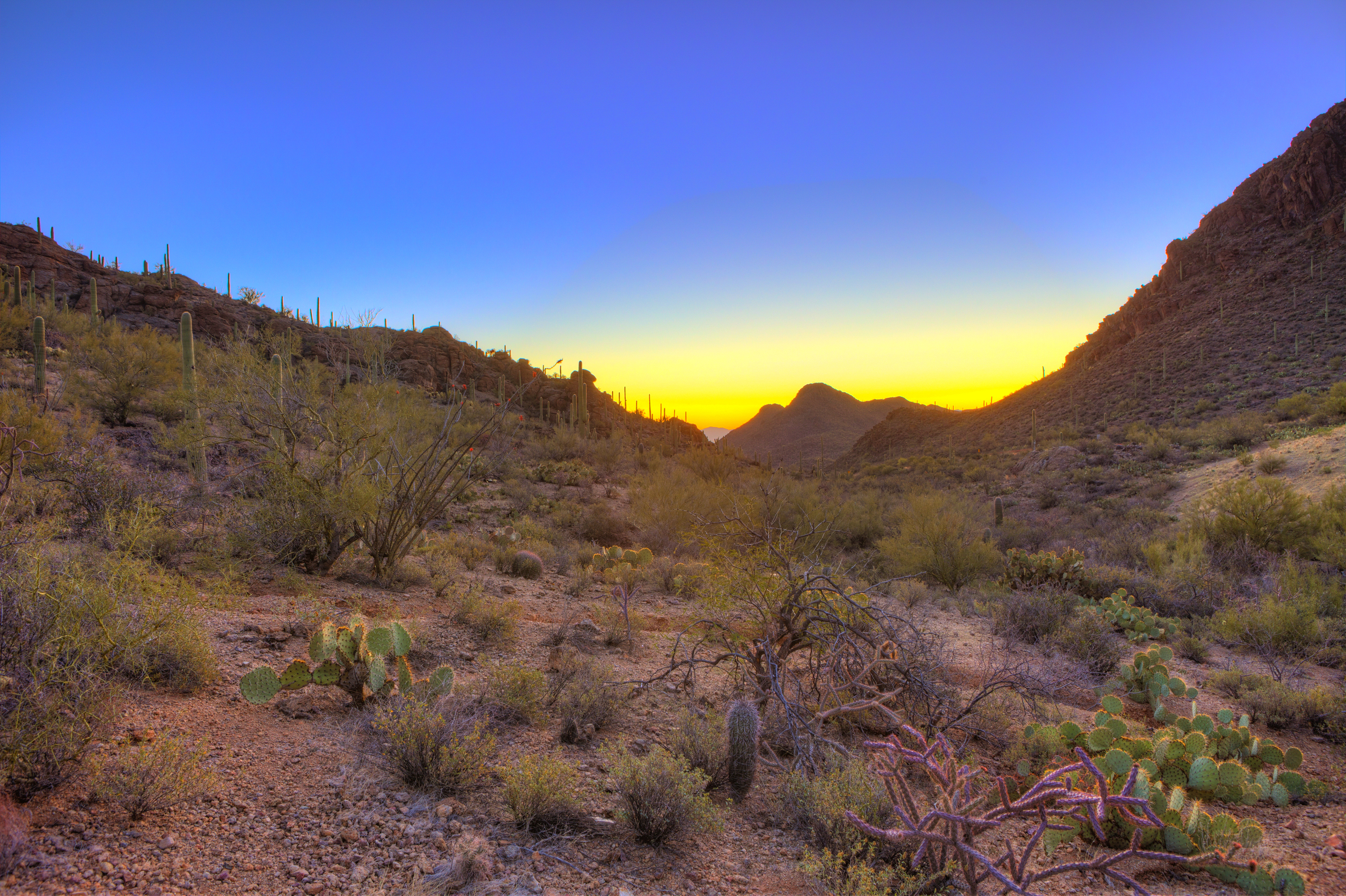 sunrise over the sonoran desert in arizona, hdr image.jpg