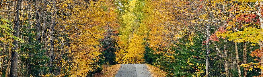 autumn-road-in-maine-K2TBQ78_edited.jpg