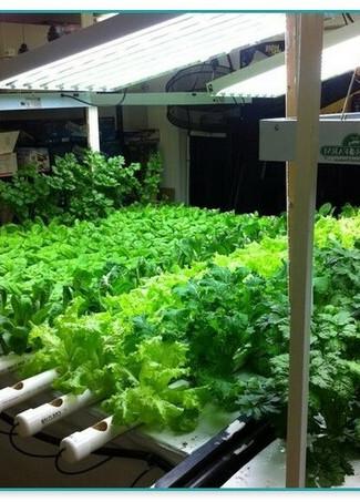 cultivationspace.com-9442964360547880.jp