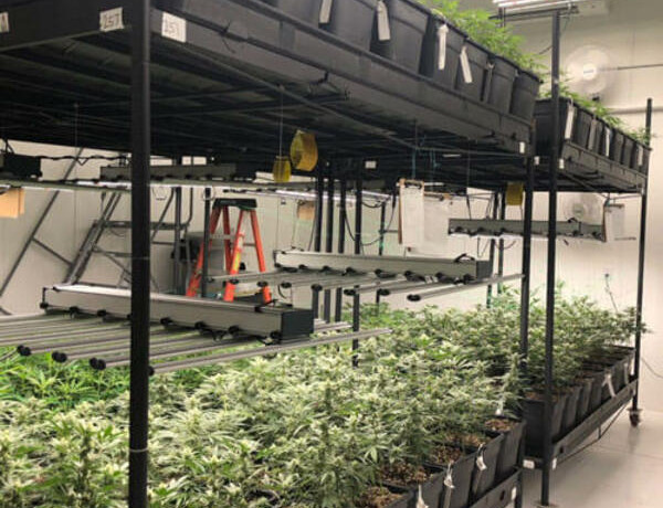 cultivationspace.com-9442903191218430 (1