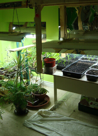 cultivationspace.com-9442892568725176.jp