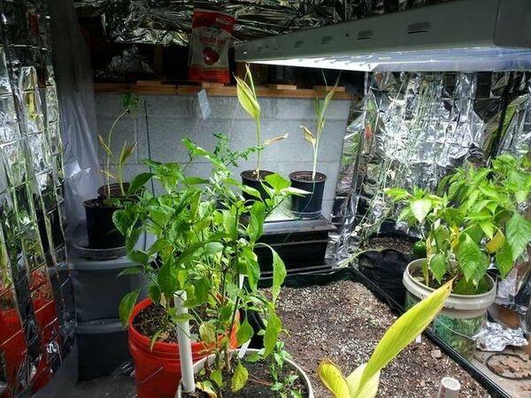 cultivationspace.com-9443008938903316.jp