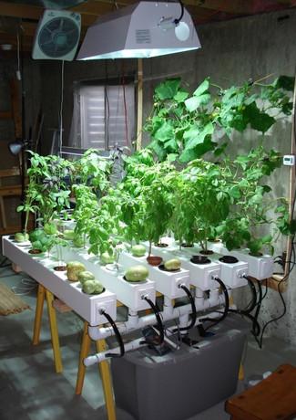 cultivationspace.com-9443052461198090.jp