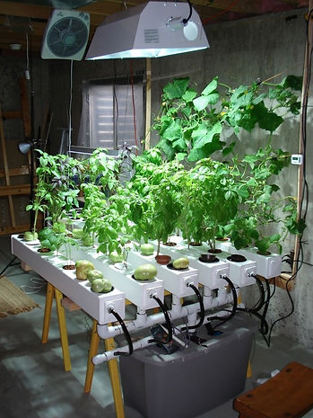 Cultivation Space