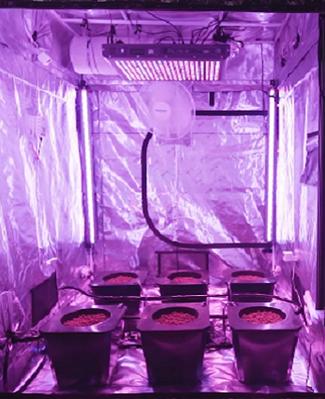 cultivationspace.com-9442959400282216.pn