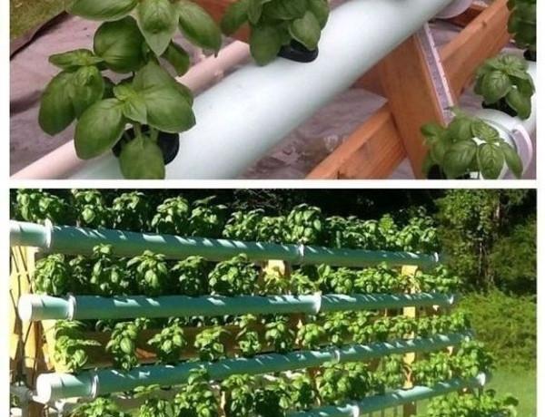 cultivationspace.com-9442889177355838.jp