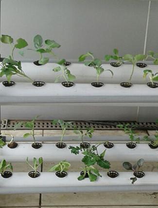 cultivationspace.com-9442922082915738.jp