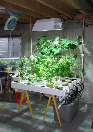 cultivationspace.com-9443052201641558.jp