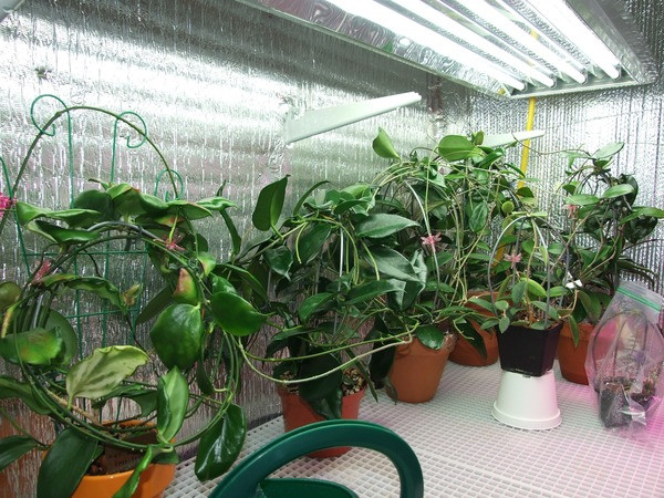 cultivationspace.com-9443008938836902.jp