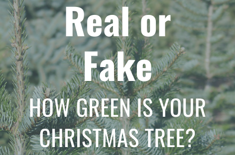 Real OR Fake? How Green is your Christmas Tree?