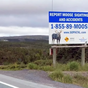 Newfoundland and Labrador drivers urged to call a moose hotline to reduce collisions