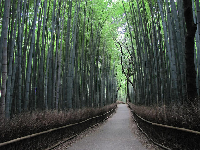 Arashiyama- Kyoto
