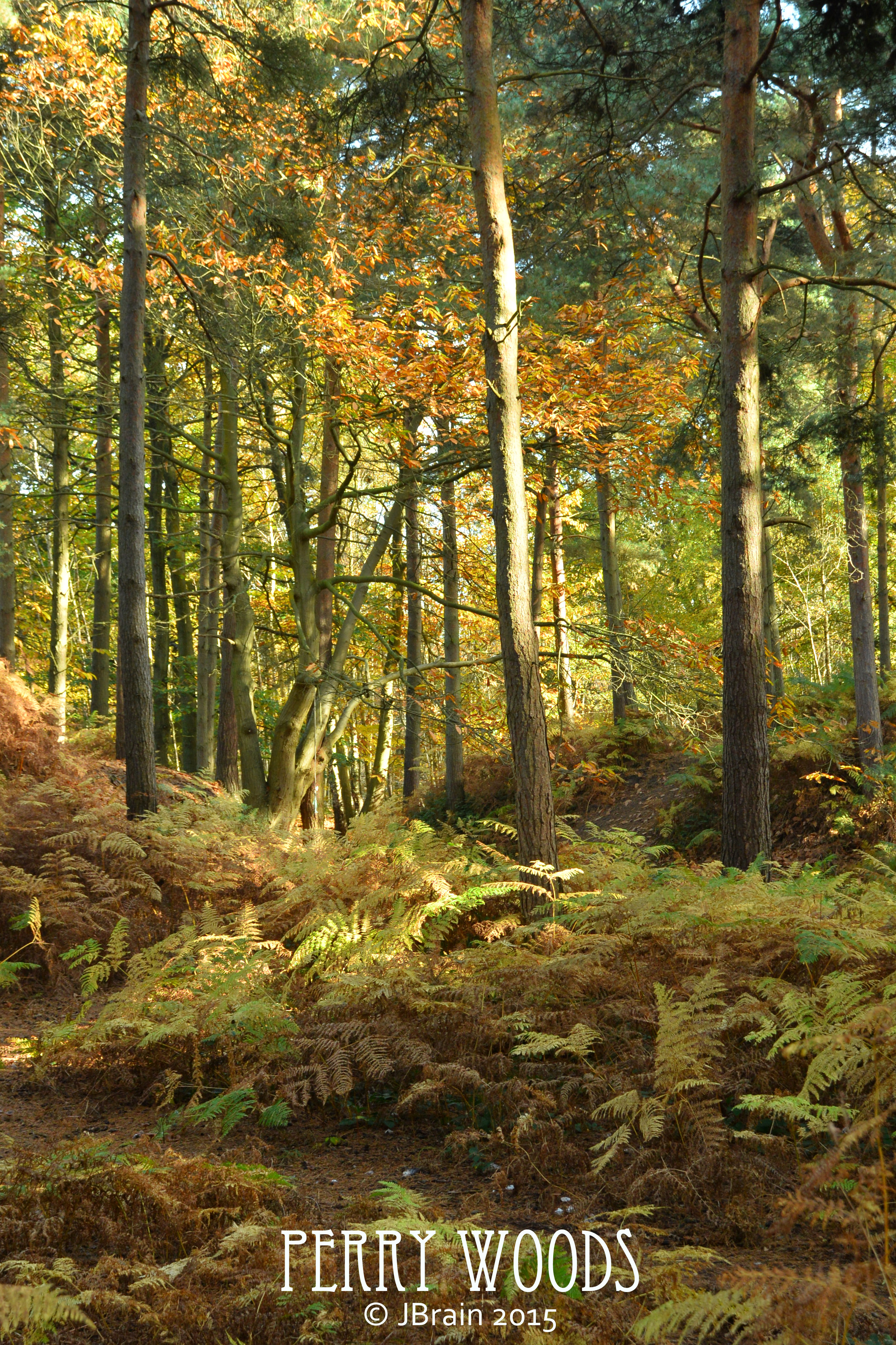 Perry Woods