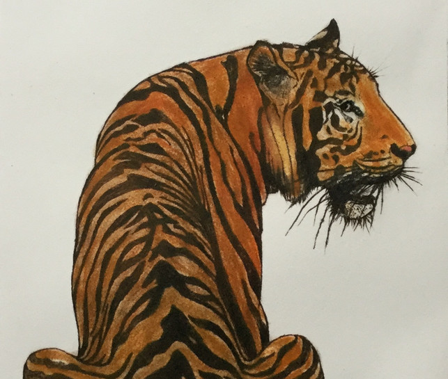 Tiger moon £250