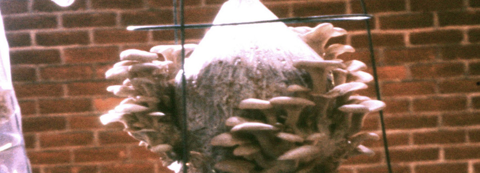 Detail showing Oyster mushrooms.