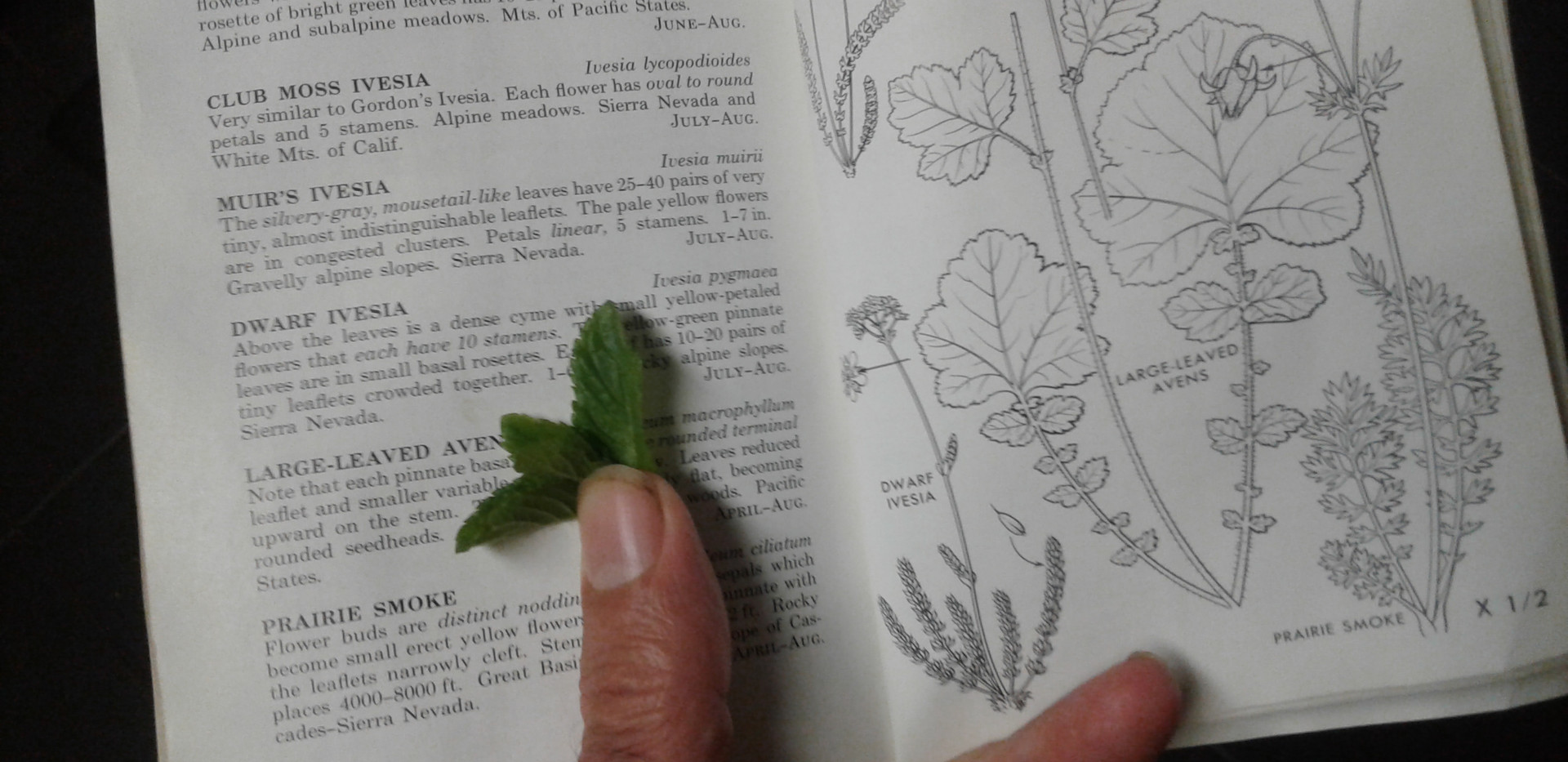 Detail showing process of identifying and labelling plants.