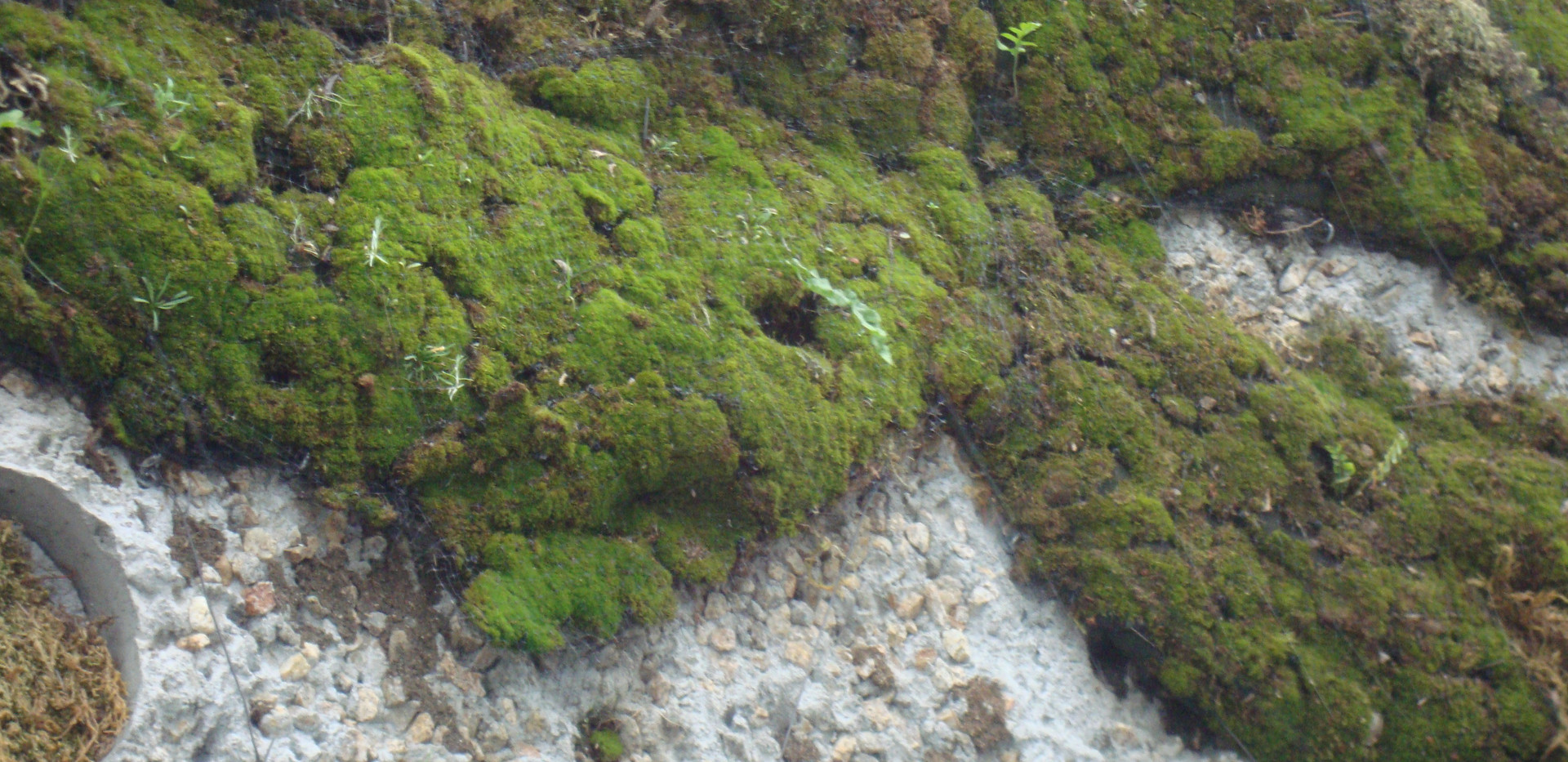 Detail of moss growth.