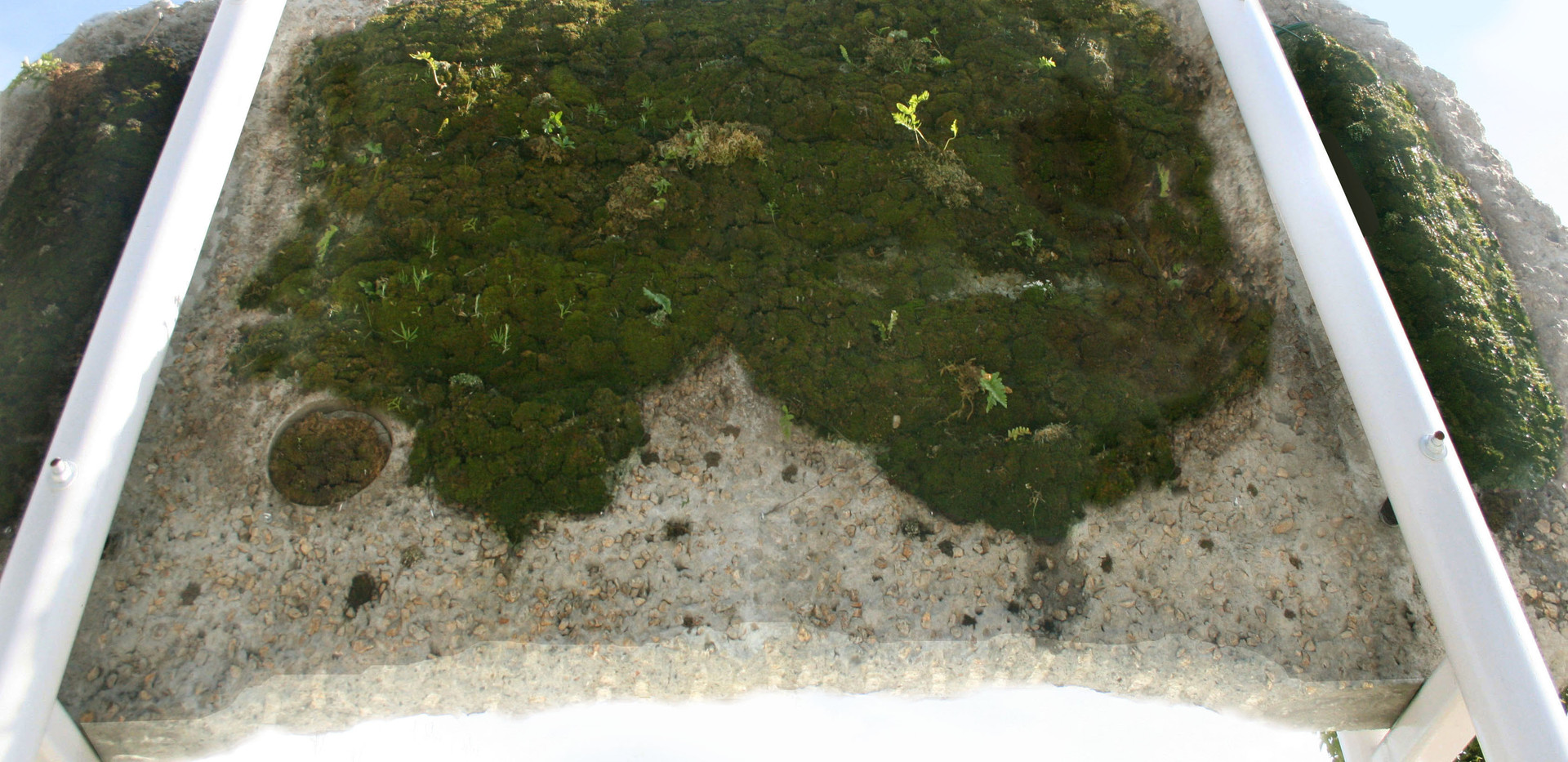 The side of the street fragment that was underground is sprayed with recycled water, allowing moss and ferns and other plants to grow.