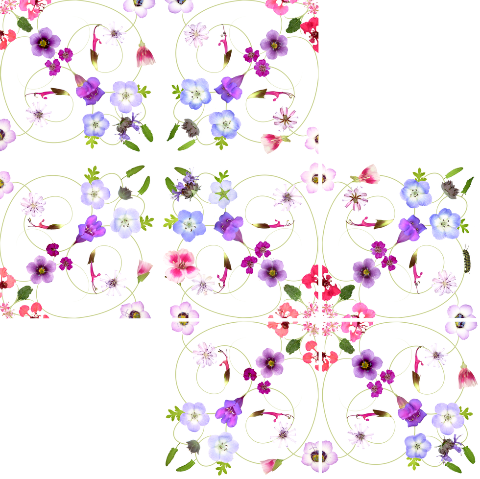 California Native Flowers Pattern