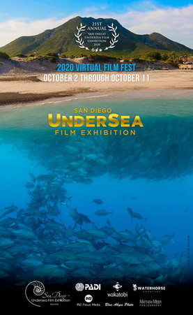 SDUFEX 2020 Virtual Poster.jpg