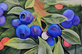 Blueberries 18435.jpg