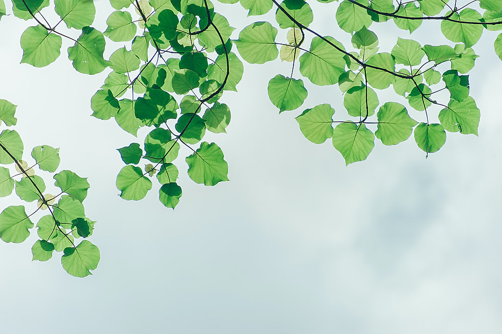 photography-of-leaves-under-the-sky-1131